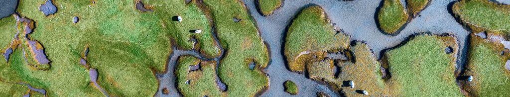 Birds-eye view of sheep grazing in a river delta maze, Ireland-Narrow Banner